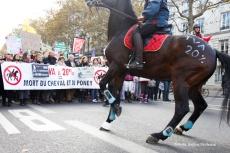 TVA Equitation 20% - 11/11/2013