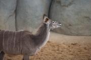 Zoo de Vincennes - mai 2014